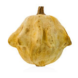Yellow-ocher decorative squash on a white background Stock Images