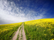 Yellow oilseed rape field Royalty Free Stock Photography