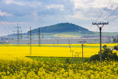 Yellow oilseed field and high-voltage electricity pylons Stock Image