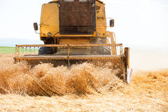 An yellow old harvester in work Stock Photo