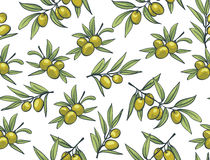 Yellow olives from branches on a white background. Vector seamless pattern Royalty Free Stock Image