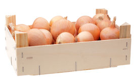 Yellow onion bulbs in wooden box Royalty Free Stock Photos