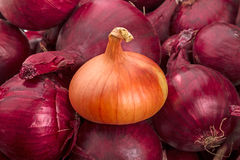 Yellow onion on red onions Royalty Free Stock Photography