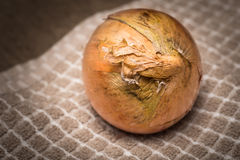 Yellow Onion Royalty Free Stock Photography