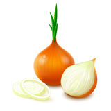 Yellow onion on white background Royalty Free Stock Photos
