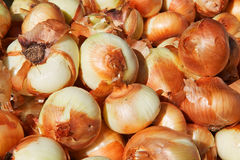 Yellow Onions Stock Image