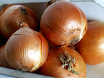 Yellow Onions. Helpful in reducing cholesterol and preventing blood clots, Onions originated in the northeren hemishpere and have bee cultivated for thousands of Royalty Free Stock Images