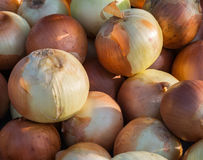Yellow onions Stock Photo