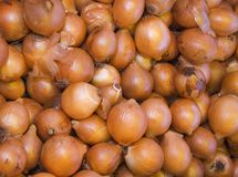 Yellow onions at the market Stock Images