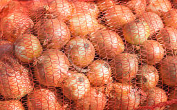 Yellow onions in mesh bag Stock Image