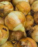 Yellow Onions Royalty Free Stock Photos
