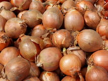 Yellow Onions For Sale Royalty Free Stock Images