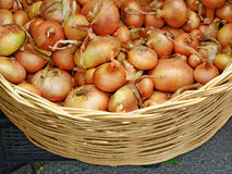 Yellow onions in a wicker basket Royalty Free Stock Images