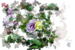 Yellow opening rose bud and lilac rose blossoms - Garden flowers blooming in the summer, watercolor splashes design. Vibrant opening yellow rose bud and lilac Royalty Free Illustration