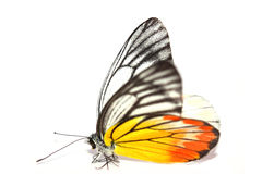 Yellow-orange πεταλούδα Στοκ φωτογραφία με δικαίωμα ελεύθερης χρήσης