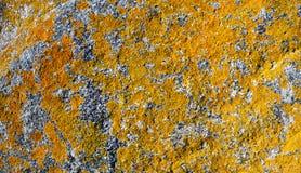 Yellow-orange σχέδιο λειχήνων στην επιφάνεια πετρών γρανίτη Στοκ Εικόνες