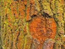 Yellow and orange bark Stock Photo