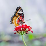 Yellow-orange butterfly Royalty Free Stock Images
