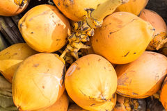 Yellow and orange coconuts Stock Image