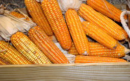 Yellow orange corn for animals in wood box Royalty Free Stock Photo