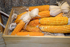 Yellow orange corn for animals in wood box Royalty Free Stock Photo