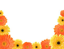 Yellow and orange daisy frame Stock Photos