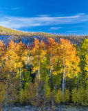 Yellow and orange fall forest and mountains Stock Photography