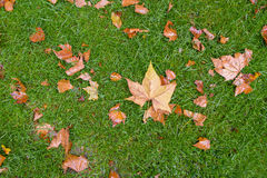 Yellow and orange fallen leaves on green grass Royalty Free Stock Photos