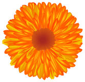 Yellow-orange flower. Royalty Free Stock Photos