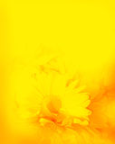 Yellow Orange Flower Romantic Background Stock Photography