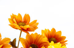 Yellow orange flowers Royalty Free Stock Photo