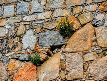 Yellow  and Orange flowers grow out of an ancient cobblestone rock wall, Europe, Medieval Stock Photo