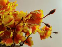 Yellow and orange flowers with plain background and blur royalty free stock photography