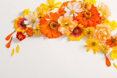 Yellow and orange flowers on white background stock photography