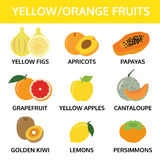Yellow and orange fruits collection info graphic, food vector Stock Images