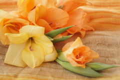 Yellow and orange gladioli Royalty Free Stock Photos