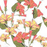 Yellow and orange hibiscus flowers on a white background with leaves. Seamless vector beach wallpaper pattern Royalty Free Illustration