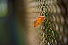 Yellow-orange leaf stuck in the mesh of the fence royalty free stock photo