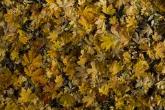 Yellow and orange leaves bed Stock Photography