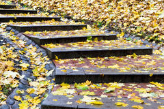 Yellow and orange leaves falled on steps Stock Image