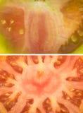 Yellow and orange lycopersicum tomatoes - close up macro shot Royalty Free Stock Photos