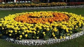 Yellow and Orange Marigold Flowers Circle Stock Photo