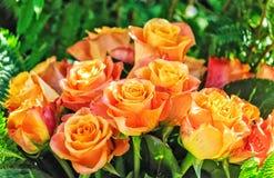 Yellow and orange nostalgic Eden Rose. Bouquet of yellow and orange nostalgic Eden Rose stock image