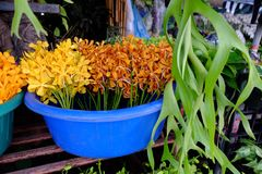Yellow and orange orchids. Outdoor orchid sales in street market, Bangkok, Thailand royalty free stock image