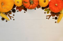 Yellow and orange pumpkins and corn with autumn decor on white wooden background for harvest fall and thanksgiving theme. cornucop royalty free stock images