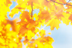 Yellow, orange and red autumn leaves in beautiful fall park. Stock Images