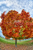 Yellow and orange and red autumn leaves in beautiful fall park. Royalty Free Stock Image