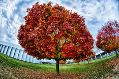 Yellow and orange and red autumn leaves in beautiful fall park. Royalty Free Stock Photos