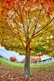 Yellow and orange and red autumn leaves in beautiful fall park. Royalty Free Stock Photography