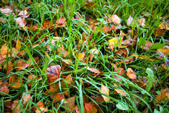 Yellow, orange and red autumn leaves in fall park Royalty Free Stock Photos